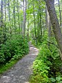 Nehantic Trail - Rhododendron Sanctuary side trail entrance.jpg