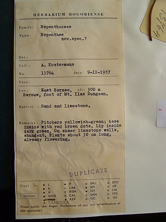 Mount Ilas Bungaan - Herbarium label from one of Kostermans's original sheets of N. campanulata