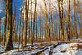 Nescopeck State Park Hardwood Zone (2).jpg