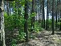 Netishyn, Khmel'nyts'ka oblast, Ukraine - panoramio (10).jpg