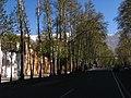 New Life on X Pahlavi Ave.Trees, 2011 Spring - panoramio (6).jpg