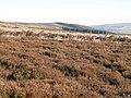 Newbiggin Fell (2) - geograph.org.uk - 700510.jpg