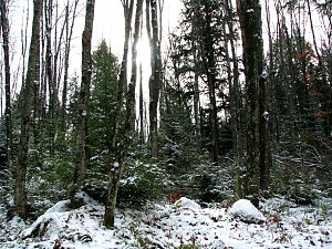 Chequamegon-Nicolet National Forest - The Nicolet National Forest in November