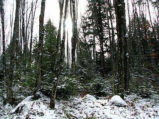 Chequamegon–Nicolet National Forest