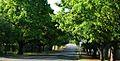 Oak Avenue, Potchefstroom-01.jpg