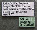 Odontomachus bauri casent0173535 label 1.jpg