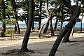 Ohama Coast Awaji Island Japan10n.jpg