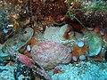Oktopus in einer Höhle.jpg