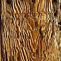 Old wood - Flickr - Stiller Beobachter.jpg