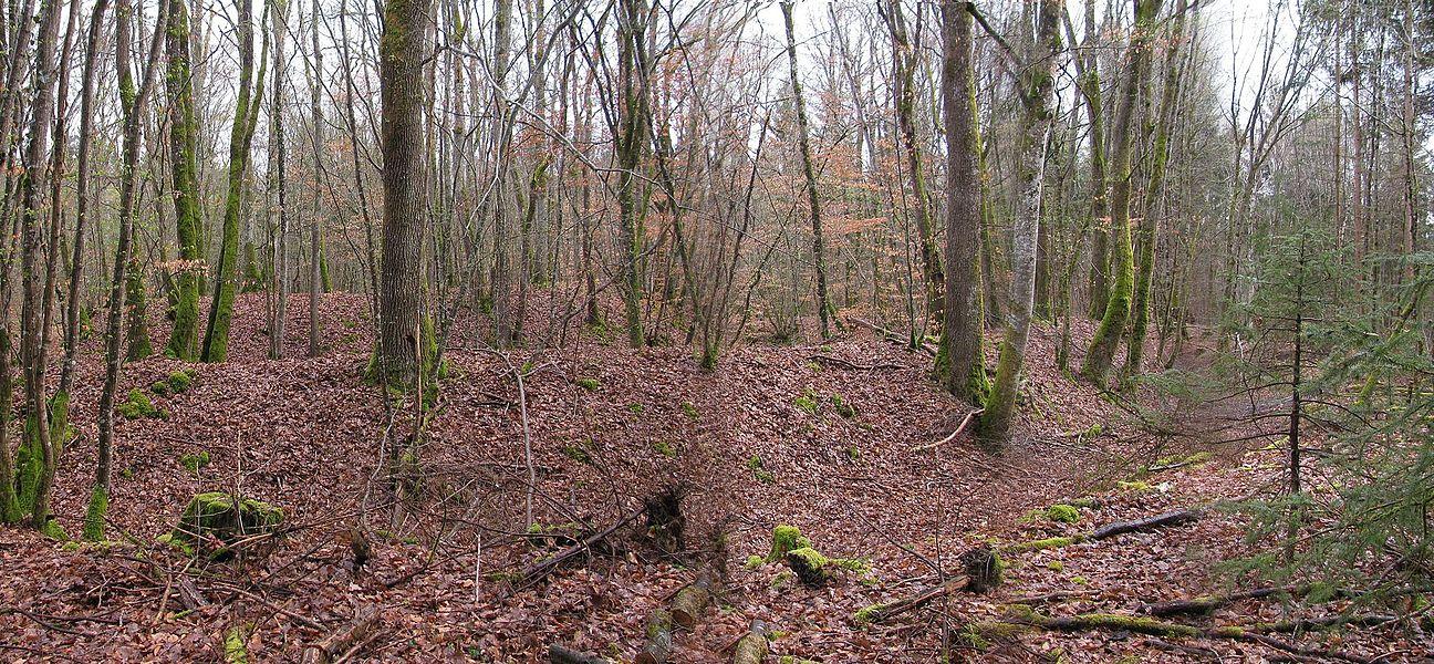 """""""oppidum"""" en forêt de Chabet, commune d'Azy-le-Vif, Nièvre, France."""