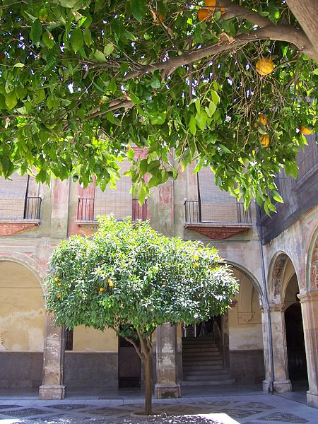 oranger en Espagne