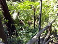 Orto botanico di Napoli 107.jpg