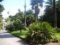 Orto botanico di Napoli 211.JPG
