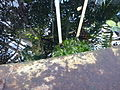 Orto botanico di Napoli 37.jpg