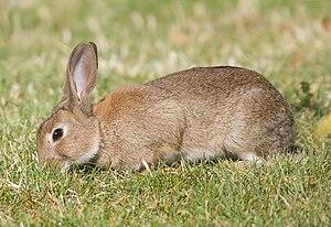 ウサギ's relation image