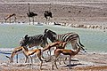 Oshikoto Region, Namibia - panoramio (15).jpg