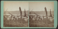 Ostego Hop Yard, from Robert N. Dennis collection of stereoscopic views.png
