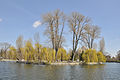 Ostriv-Chaika-park-Shevchenka-15043251.jpg