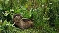Otter Island.jpg