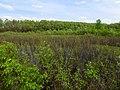 Overgrown lake Desna.jpg