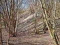 Overgrown spoil heaps - geograph.org.uk - 690225.jpg