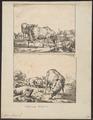 Ovis aries - 1700-1880 - Print - Iconographia Zoologica - Special Collections University of Amsterdam - UBA01 IZ21300011.tif