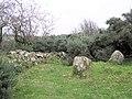 Oweyanirvore Chambered grave - geograph.org.uk - 67126.jpg