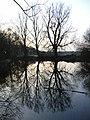Ox Pond, Windsor Great Park - geograph.org.uk - 110917.jpg