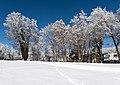 Pörtschach Johannaweg winterlicher Park mit Bäumen 14012017 6068.jpg