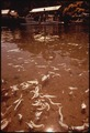 POLLUTION FROM FISH PROCESSING PLANT - NARA - 542985.tif