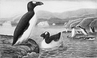American Ornithological Society - Symbol of American Ornithologists' Union, the extinct great auk