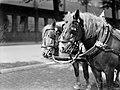 Paarden van de Heineken Brouwerij in Amsterdam, Bestanddeelnr 189-0520.jpg