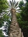Palme im Parque del Moro - panoramio.jpg