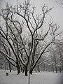 Parco Solari Trees Snow2.jpg