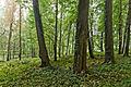 Park w zespole pałacowym Potockich, Krzeszowice, A-423 M 07.jpg