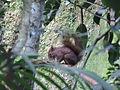 Parque Estadual de Vila Velha .. Esquilo.JPG