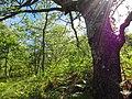 Parque Natural de Montesinho Porto Furado trail (5732605057).jpg