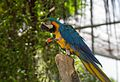 Parrots at Butterfly Park & Insect Kingdom, Sentosa 15.jpg