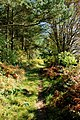 Path across Baslow Bar - geograph.org.uk - 579078.jpg