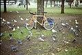 Pigeons (46624641875).jpg