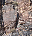 Pine Creek Canyon Brass Wall Left The Big Horn 1.jpg