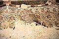 Pittura murale di Giovanni Boccati con la raffigurazione degli Uomini d'Arme,3.JPG