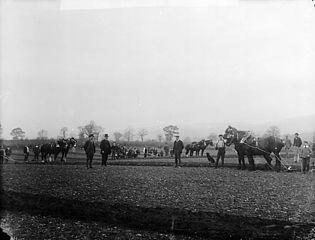 Ploughing match, Llandyrnog