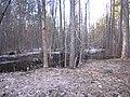 Pludi druvciema 2011 - panoramio (24).jpg