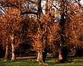 Podlasie Bug Gorge Landscape Park D15.jpg