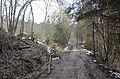 Poertschach Forstweg zur Poertschacher Alm 03032014 449.jpg