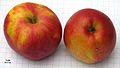 Pommes Berlepsch rouges.jpg