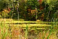 Pond (2896647435).jpg