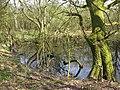 Pond in scrub near Nunley Pit - geograph.org.uk - 1804923.jpg