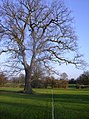 Prospect Park - geograph.org.uk - 649445.jpg